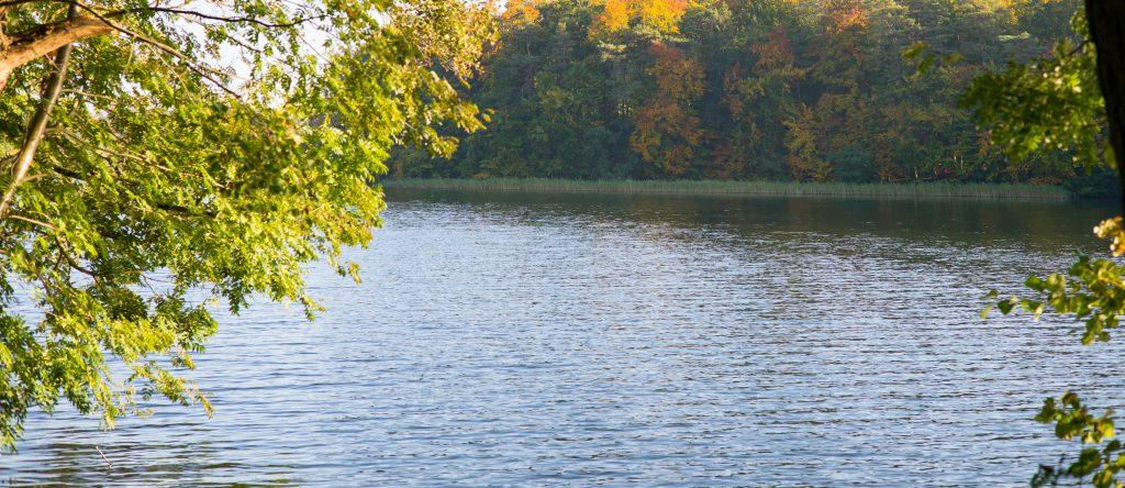 Woran erkennt man saubere Seen?