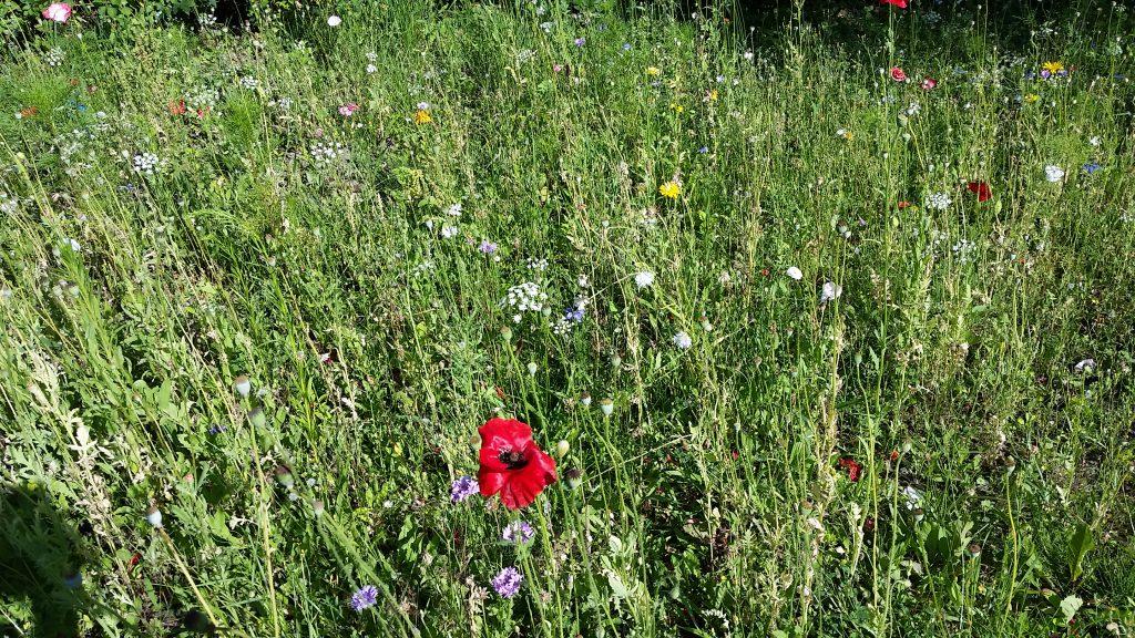 Unser Schulgarten – Natur pur in der Stadt
