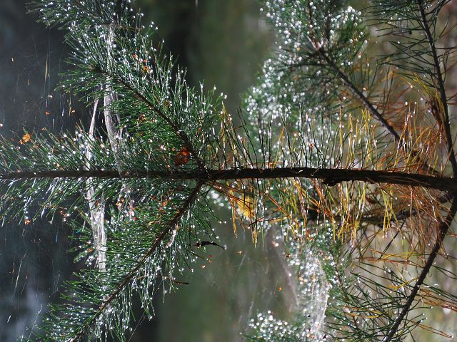 Entwicklung einer Naturwaldzelle in Wandlitz