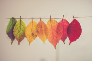 Bunte Blätter auf der Wäscheleine